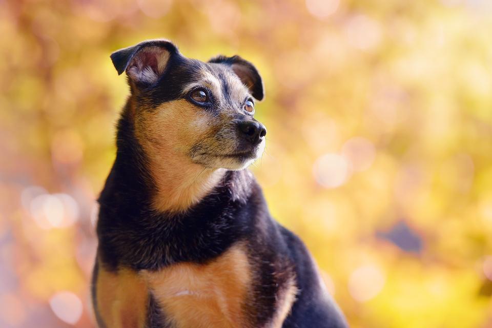 Hondenfotografie01