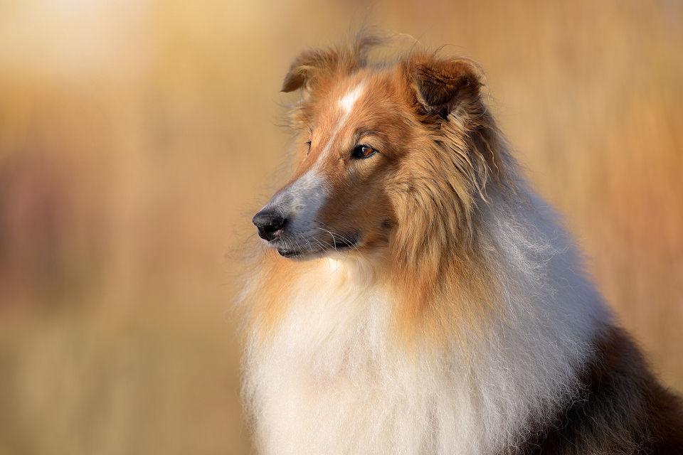 Hondenfotografie06