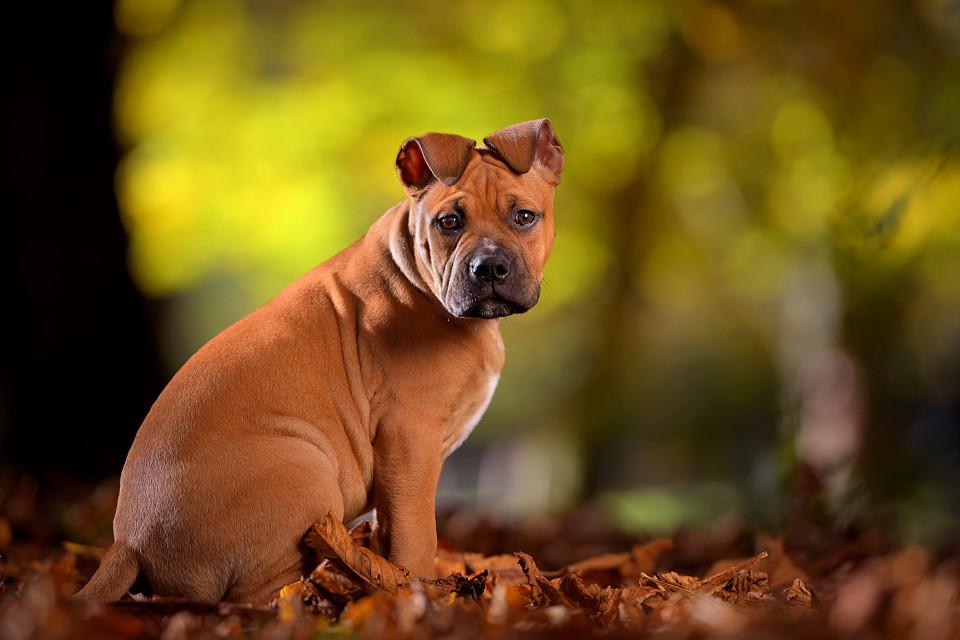 Hondenfotografie09