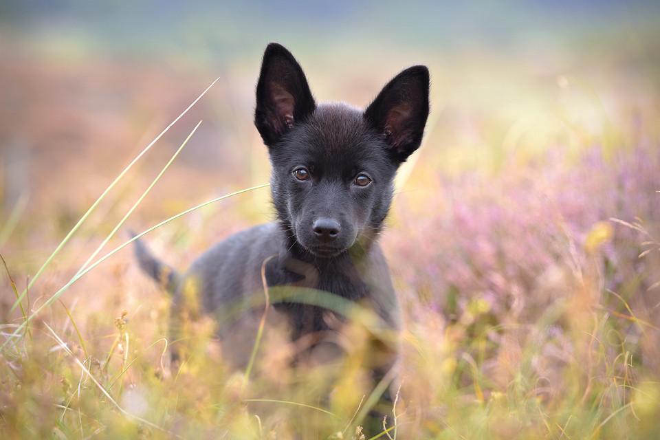 Hondenfotografie20