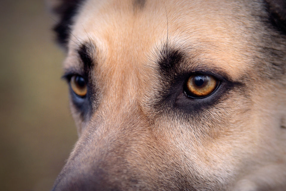 Hondenfotografie24