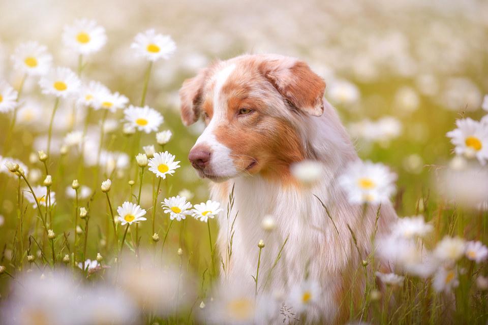 Hondenfotografie31