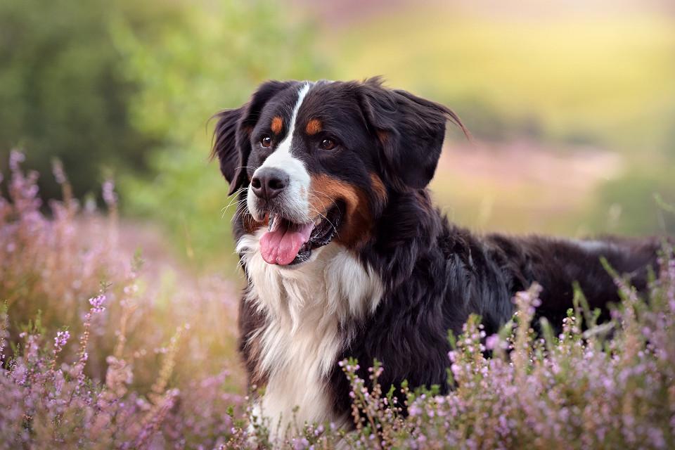 Hondenfotografie40