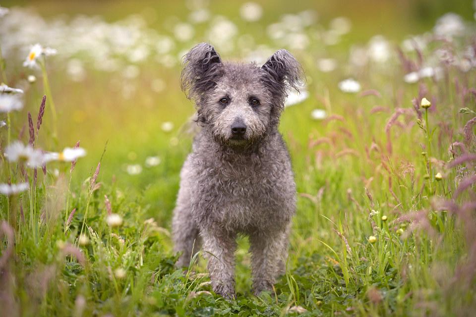Hondenfotografie43