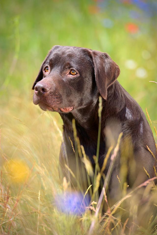 Hondenfotografie45