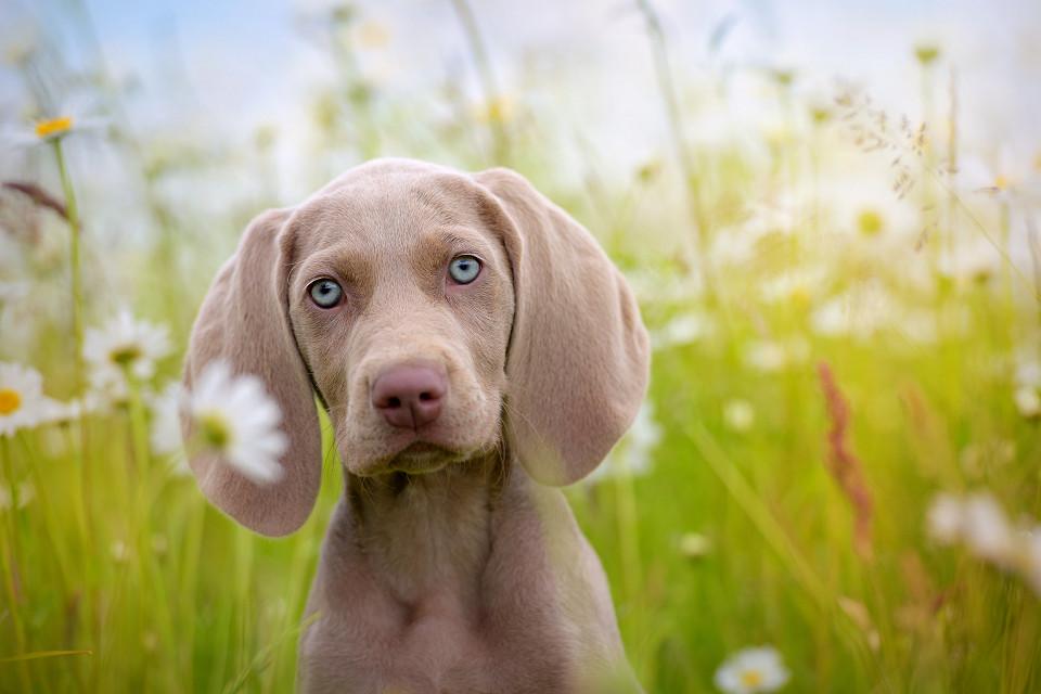 Hondenfotografie47