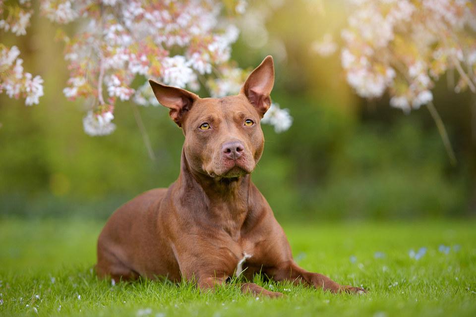 Hondenfotografie48