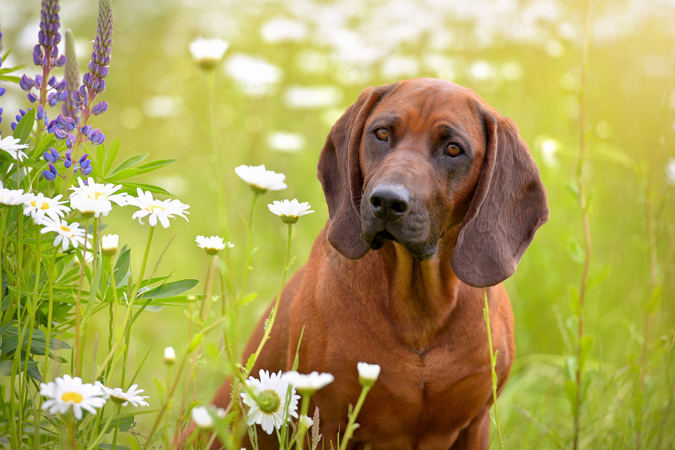 Hondenfotografie49
