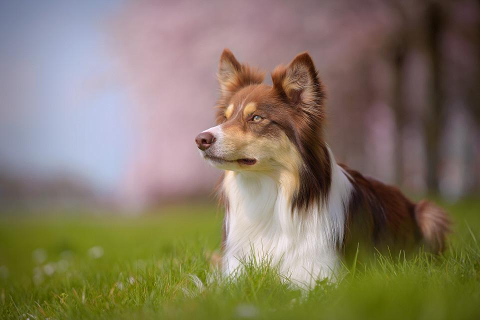 Hondenfotografie51