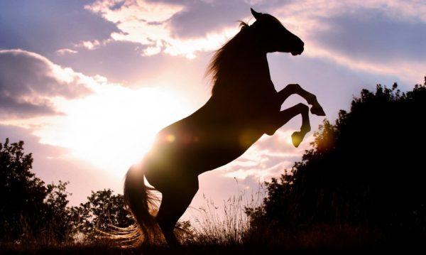 Hypo Focus Paardenfotografie