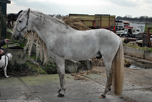 Vuil paard